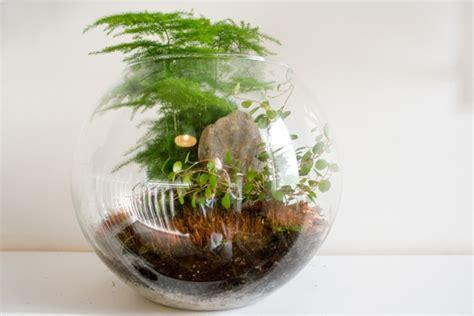 tropical plants for terrariums tropical terrarium gardening with terrariums