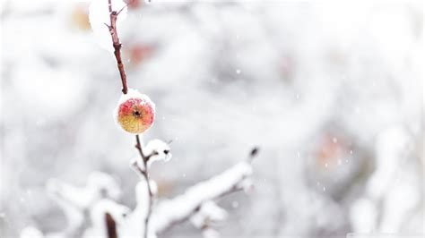 frozen wallpaper mac download frozen apple winter wallpaper 1920x1080
