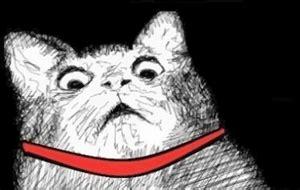 Gasp Meme - cat gasp