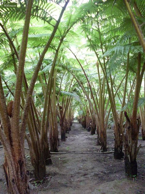 pflanzen versand farne pflanzen versand