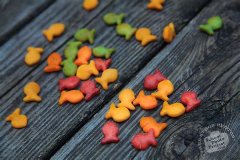 colorful goldfish goldfish snack free stock photo image picture colorful