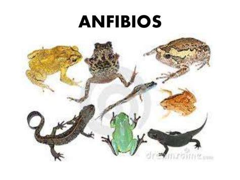 imagenes animales anfibios los animales