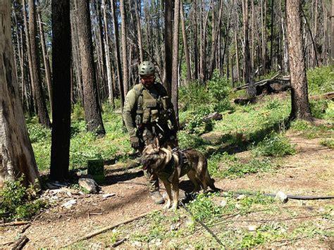 california service laws usda 187 k 9s a enforcement officer s equal partner best friend