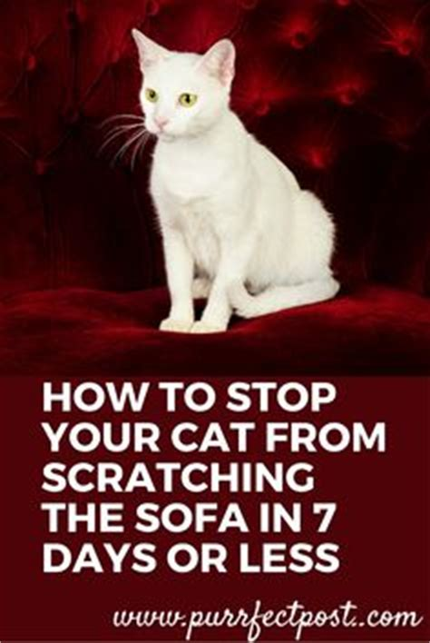 how to stop cat from scratching sofa 1000 ideas about scratching post on cat