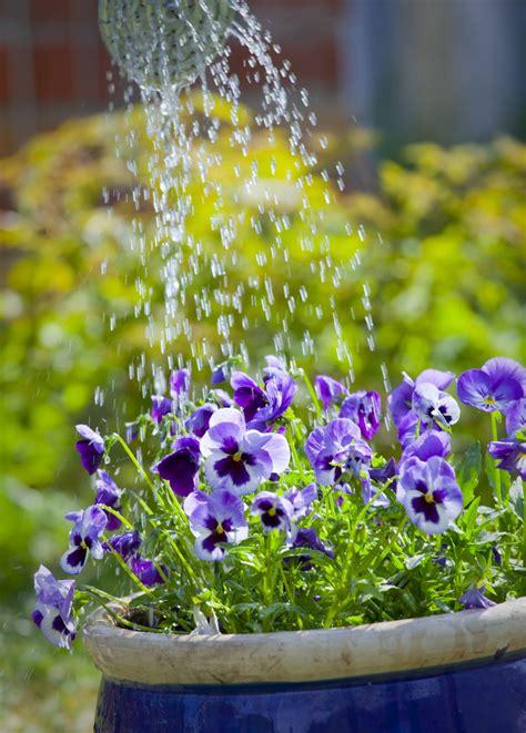 innaffiare giardino come annaffiare le piante senza sprecare acqua