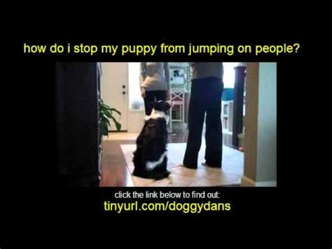 Stop From Jumping On by How Do I Stop My Puppy From Jumping On