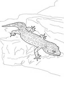 Leopard Gecko Coloring Page Supercoloring Com Gecko Insect Coloring Page