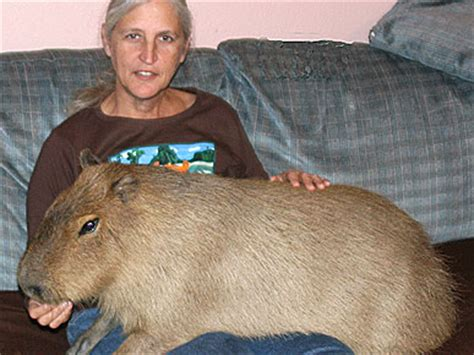 life with the world's largest rodent | people.com