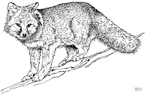 swift fox coloring page realistic grey fox coloring page free printable coloring