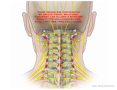 diagram of nerves in neck posterior neck anatomy 5