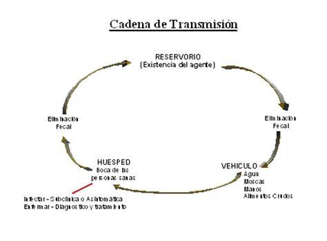 cadena epidemiologica fiebre tifoidea epidemiologia escobar enfermedades transmitidas por el