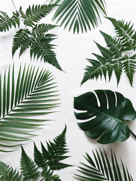 wallpaper daun palma 263 best images about lush life on pinterest agaves