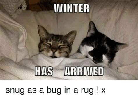 as a bug in a rug 25 best memes about bugs in a rug bugs in a rug memes