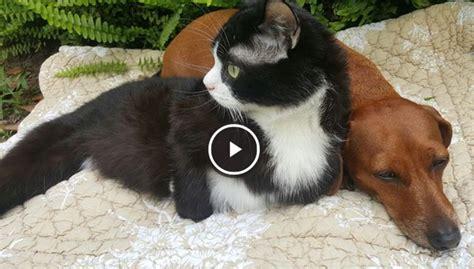 fotos animales juntos un perro abandonado protege a un gato paral 237 tico y