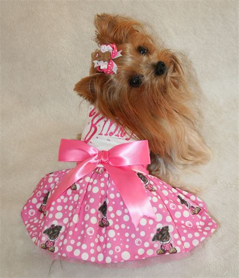 yorkie clothes 1000 images about yorkies on