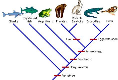 whale evolution data answer key evolution synapomorphies cladogram schoolworkhelper