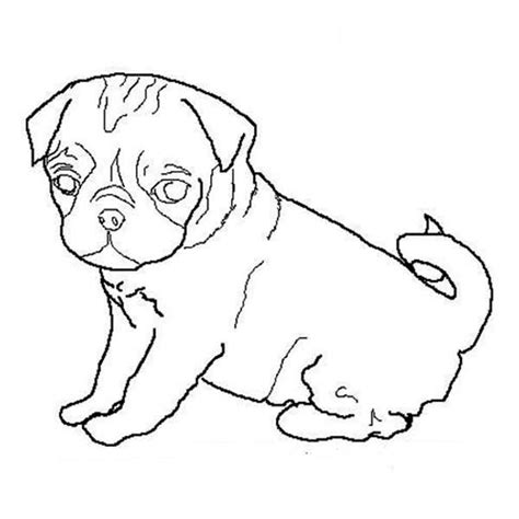 coloring pages of pugs dogs free dogs outline free clip free clip
