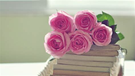 pink roses wallpaper  images