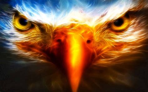 cool eagle wallpaper cool eagle animal backgrounds hd wallpaper desktop hd