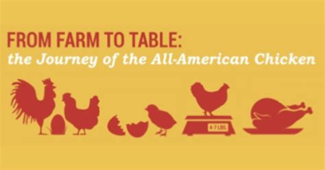 farm to table farm to table chicken check in