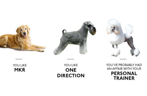 what breed of are you what your breed says about you brisbane the list