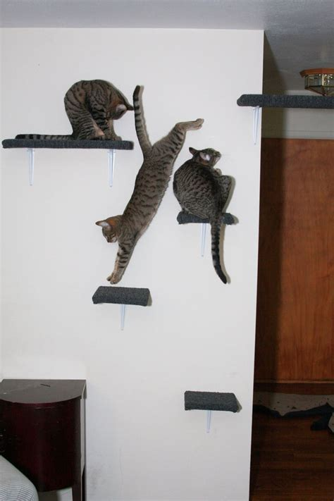 41 best images about cool cat shelves on cat