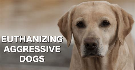 euthanize aggressive why we can t save them all euthanasia and aggressive dogs thatmutt a