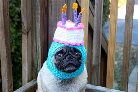 pug birthday friday roundup animals to make you laugh fieldwork in stilettos