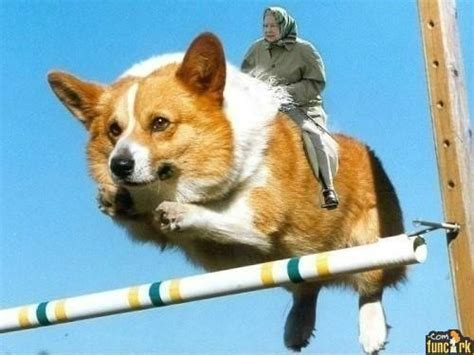 flying puppies hurdling flying