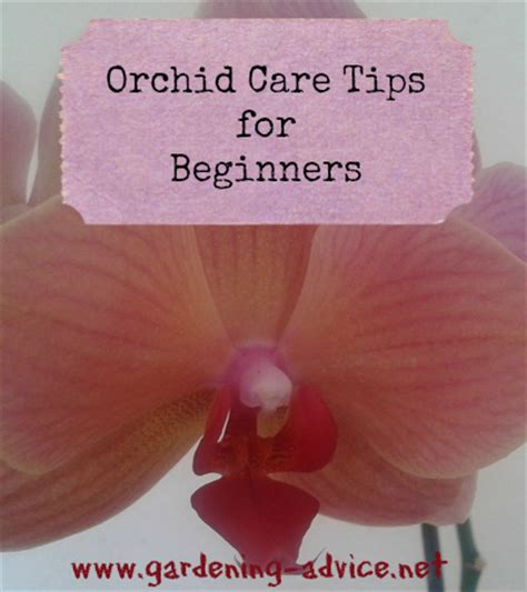 Gardening Tips For Beginners Orchids images