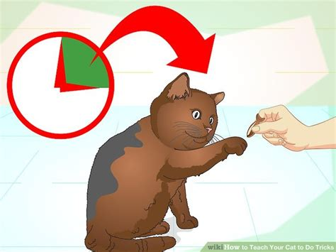how to my to do tricks how to teach your cat to do tricks 15 steps with pictures