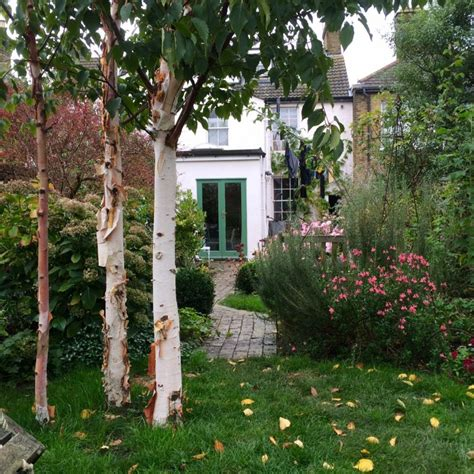 trees to plant in backyard the 8 best perfect for privacy garden trees the middle