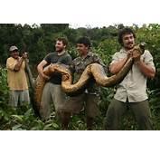 Video British Indiana Jones Captures 18ft Anaconda In Guyana  AOL
