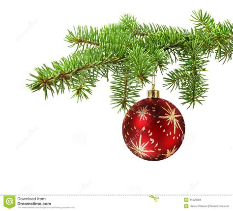 red ball on christmas tree branch stock photo image