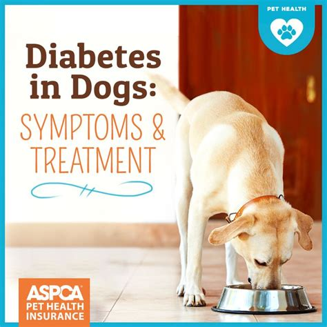 diabetes in dogs the 25 best ideas about diabetes in dogs on