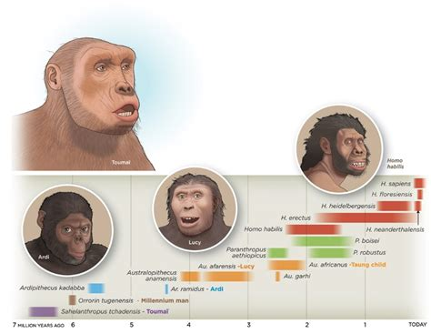 the last human a guide to twenty two species of extinct humans ebook 인류의 진화 네이버 블로그