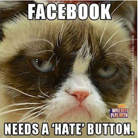 Best Memes On Facebook - grumpy cat quotes about work quotesgram