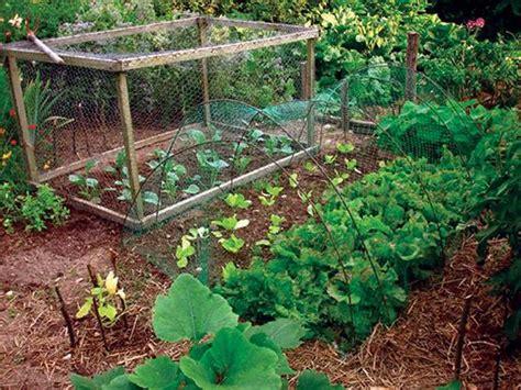 Vegetable Gardening A Beginner S Guide Nc State Gardening Netting For Vegetables
