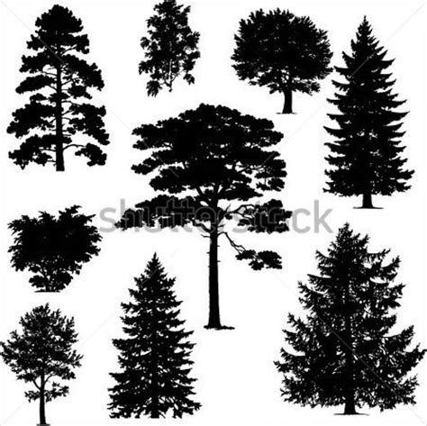 pine trees vector www imgkid com the image kid has it