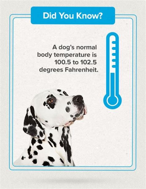 dogs normal temp pin by marian forbes on store stuff