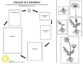 life cycle of a plant worksheet new calendar template site