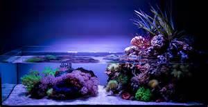 Best Low Light Aquarium Plants wawawang 2015 featured aquariums featured aquariums