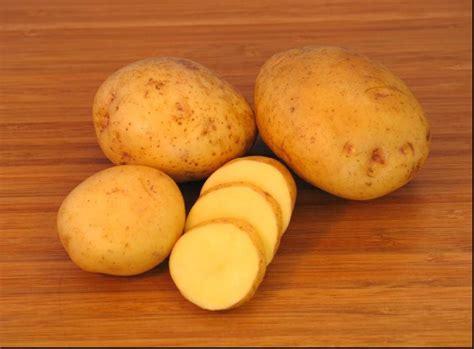 carbohydrates yukon gold potatoes terra forming terra friendly yellow potatoes