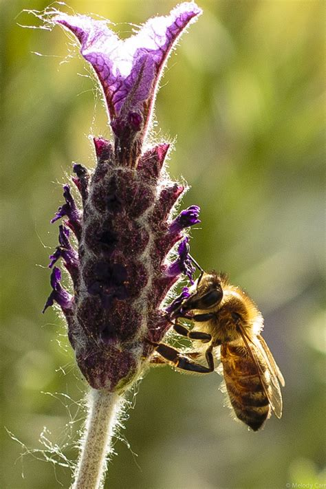 Bee Sweepstakes - 2015 beauty of the bee photo contest winners beyond toxics