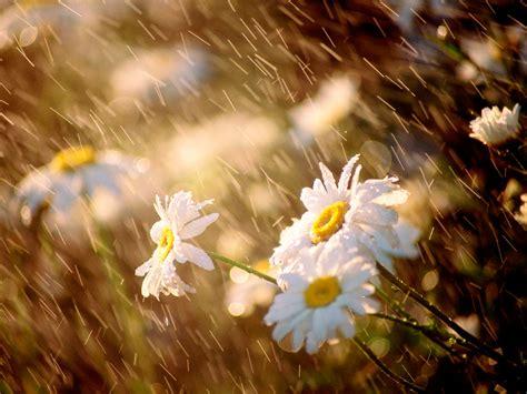 imagenes bellas de lluvia gifs y fondos pazenlatormenta fondos de pantalla de lluvia