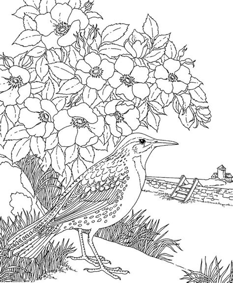 coloring pages of state birds and flowers free printable coloring page north dakota state bird and