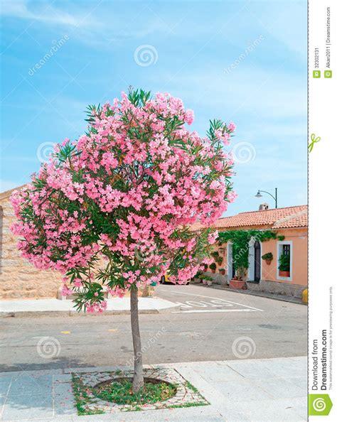Arizona House Plans Oleander Tree Stock Image Image 32302131