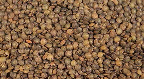northern gate lentils