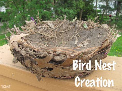 Do When You Build A Nest by The Chocolate Muffin Tree Our Bird Nest Creation