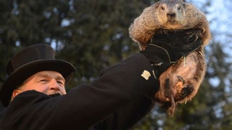 groundhog day phil groundhog day festivities and a look at punxsutawney phil